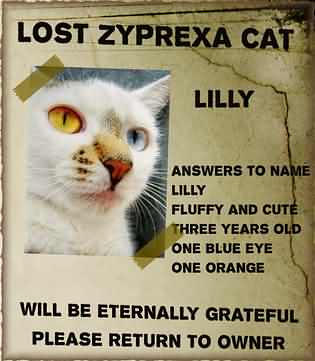 Lost Zyprexa cat